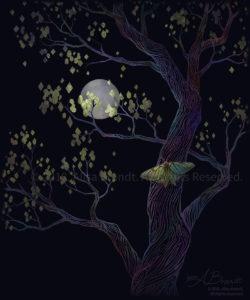Spanish Moon Moth Design